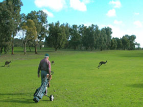 Coffin Bay Golf Club - Pubs and Clubs