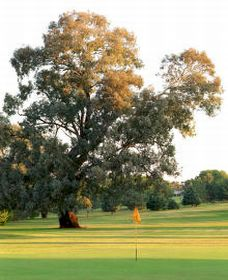 Cowra Golf Club - Pubs and Clubs