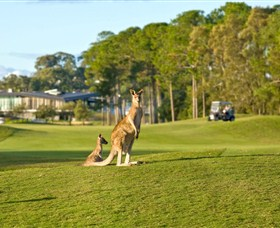 Sanctuary Cove Golf and Country Club - Pubs and Clubs