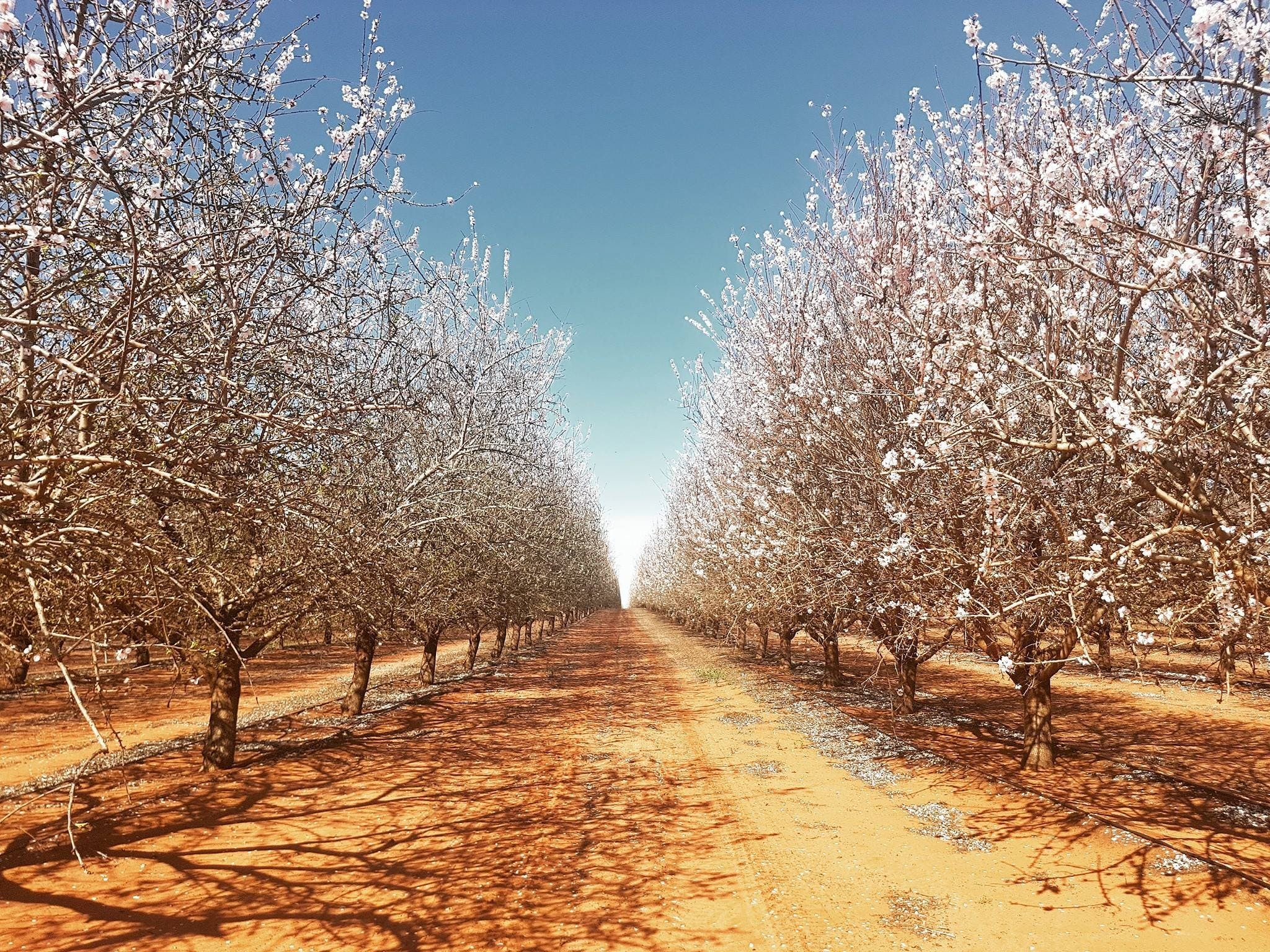 Mallee Almond Blossom Festival - Pubs and Clubs