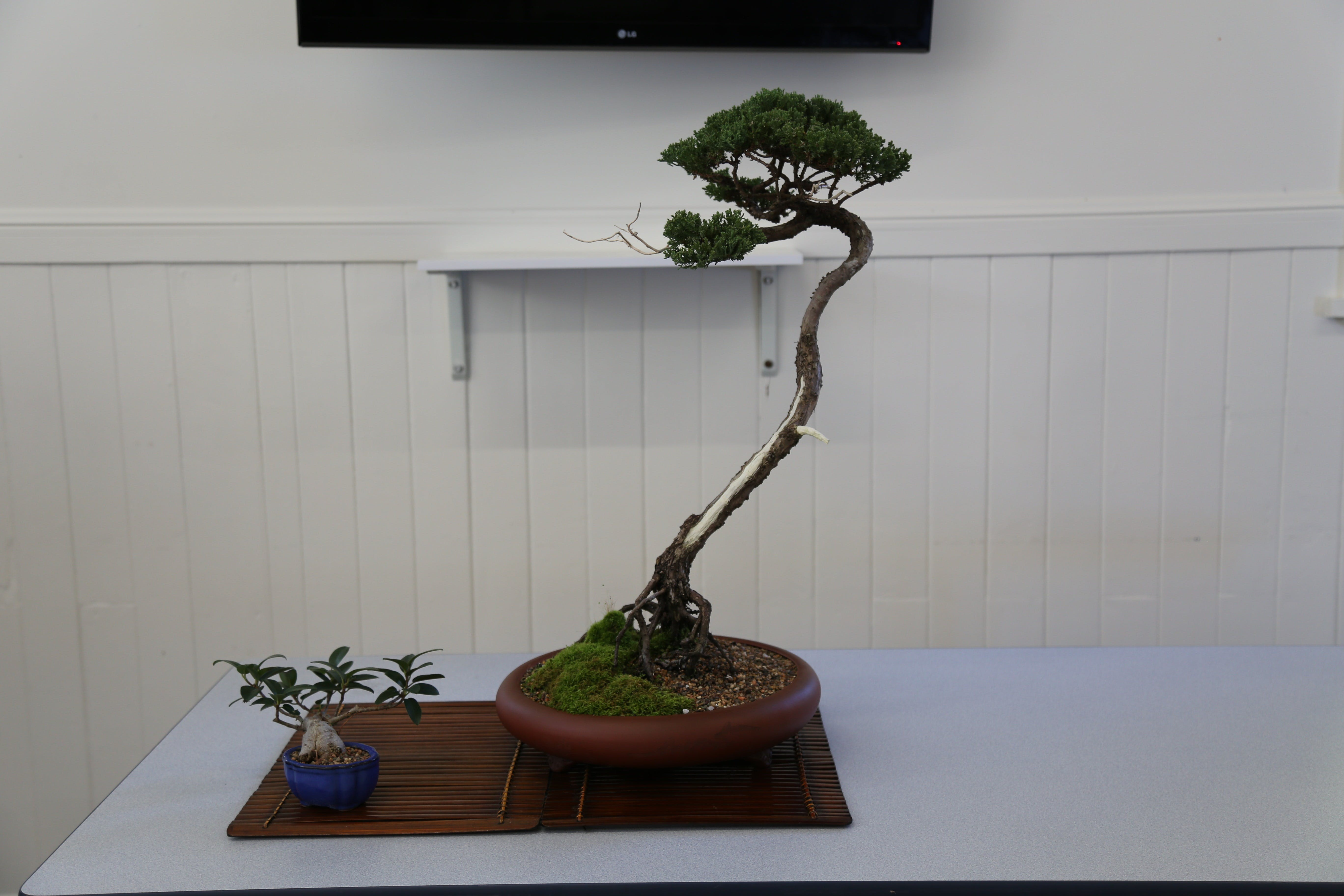 Wauchope Bonsai Workshop Group - Pubs and Clubs