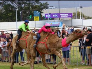 Camel Races at Gosford Showgrounds - Pubs and Clubs