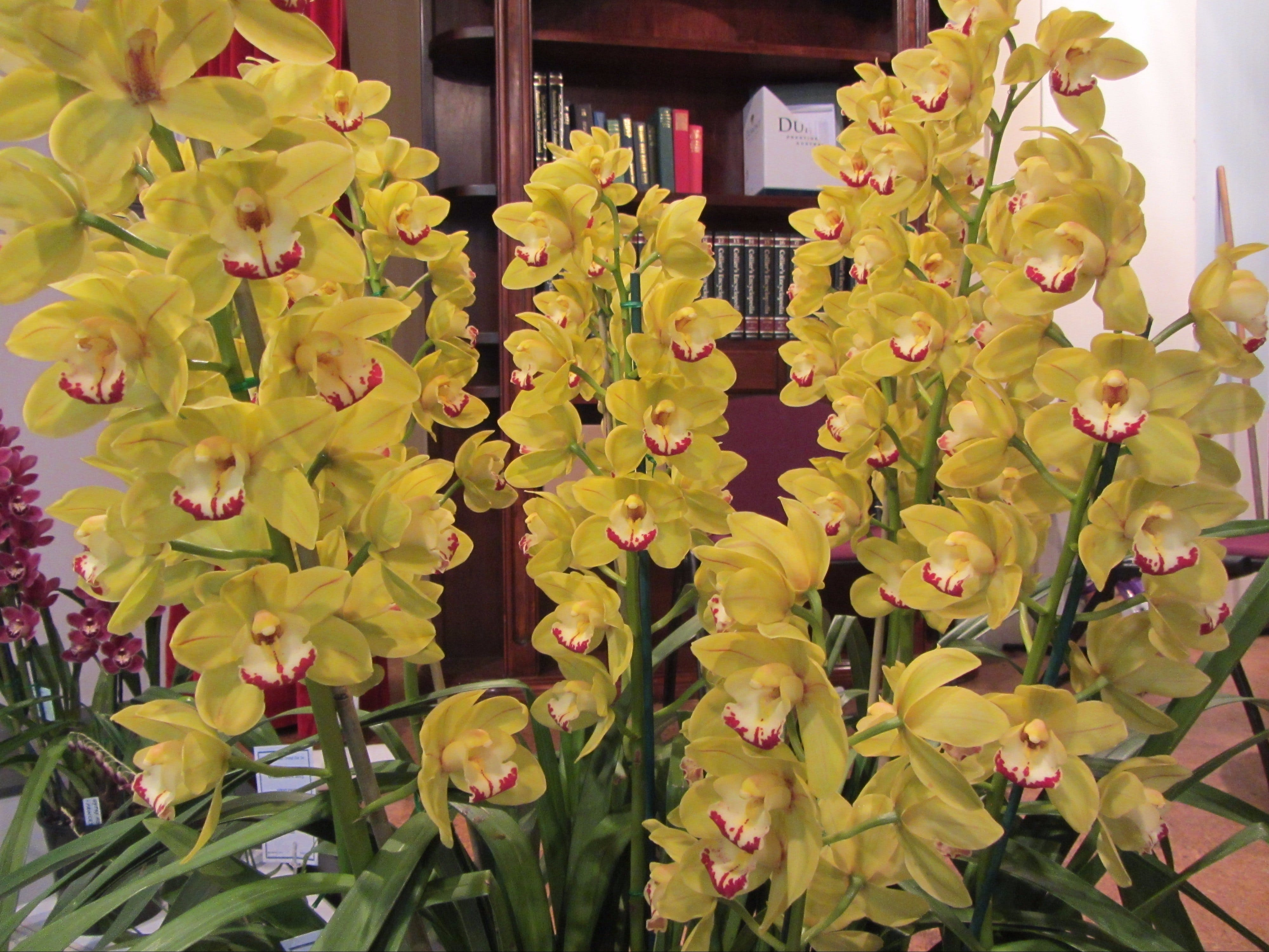 Sapphire Coast Orchid Club Winter Orchid Show - Pubs and Clubs