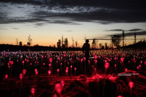 Field of Light Uluru - Pubs and Clubs
