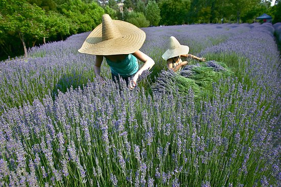 Lavandula Swiss Italian Farm - Pubs and Clubs