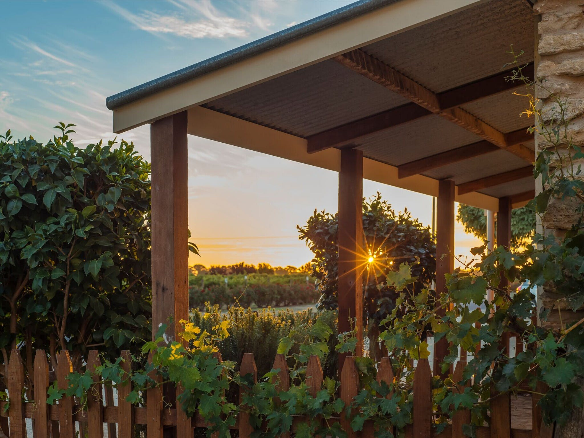 Caf in the Vines - Pubs and Clubs