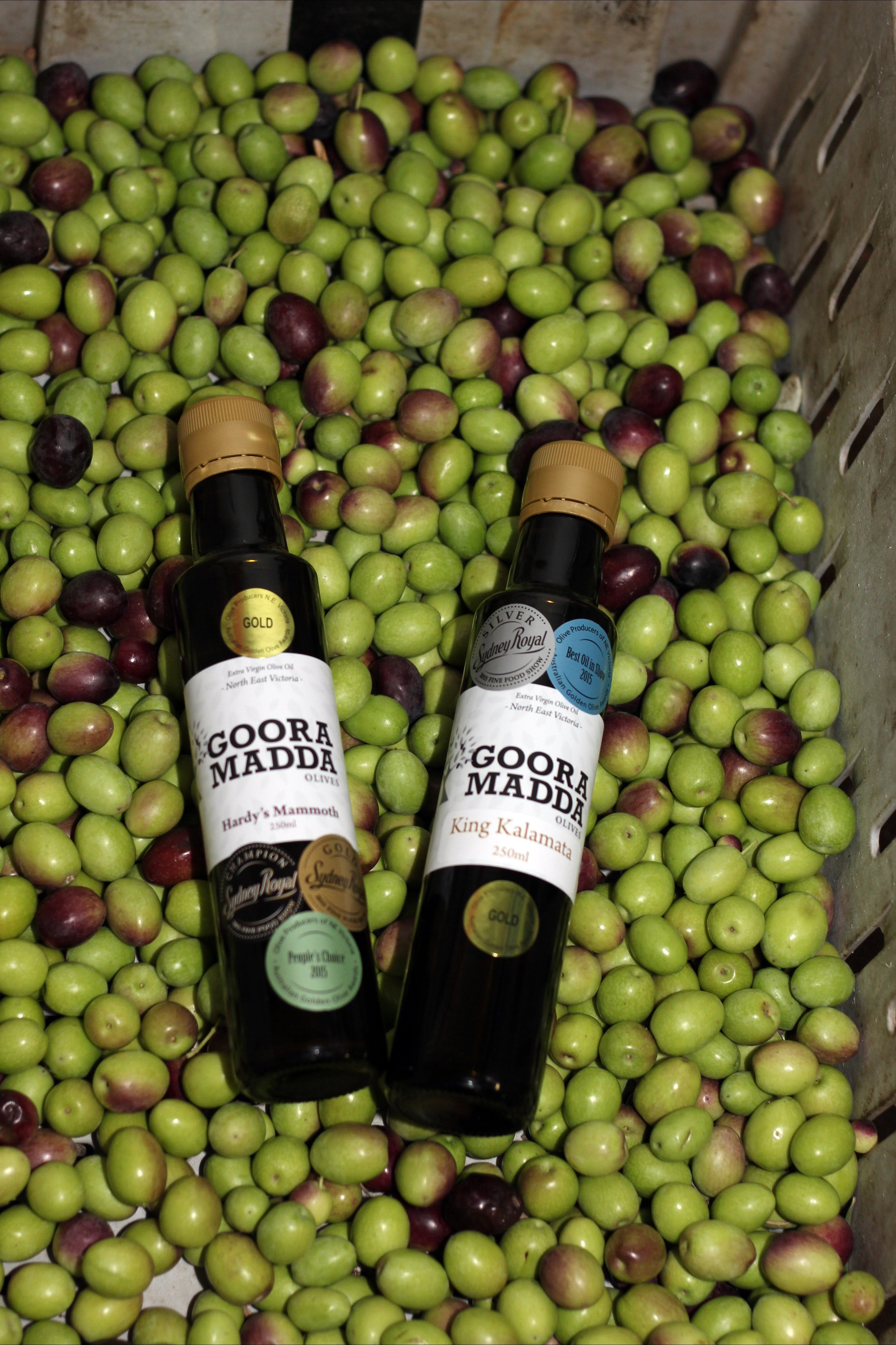 Gooramadda Olives - Pubs and Clubs