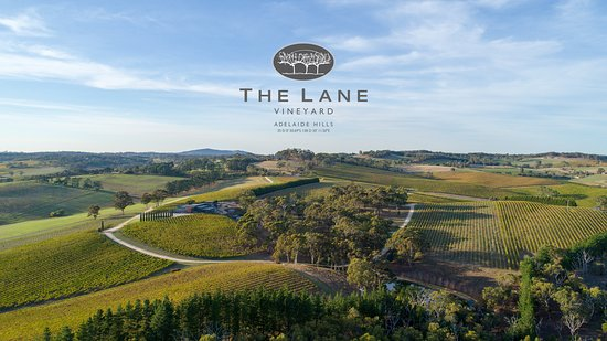 The Lane Vineyard - Pubs and Clubs