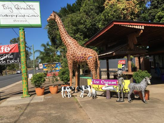 The Big Giraffe - Pubs and Clubs